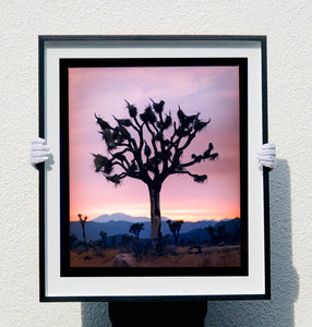 Richard Heeps - Joshua Tree Framed