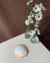Load image into Gallery viewer, Scallop Shell