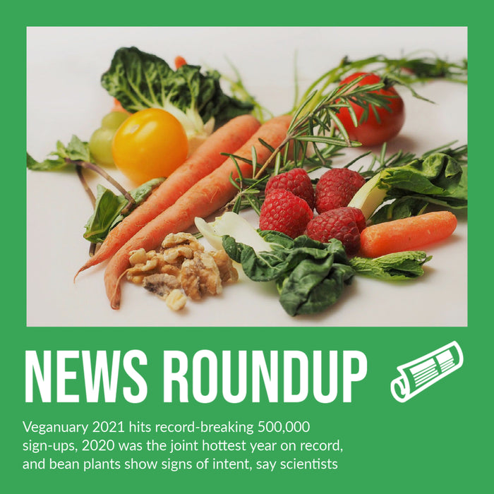Veganuary 2021 hits record-breaking 500,000 sign-ups, 2020 was the joint hottest year on record, and bean plants show signs of intent, say scientists
