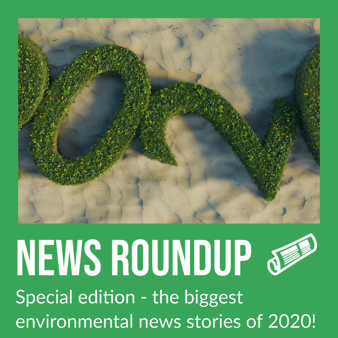 The biggest environmental news stories of 2020