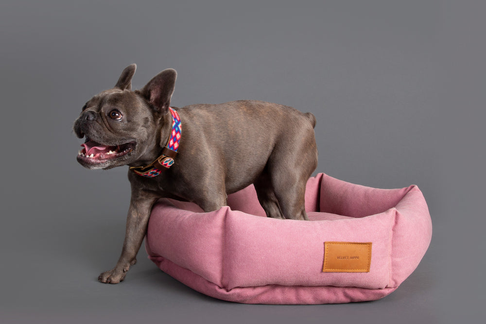 Meet the Velvet Hippo Dog Models