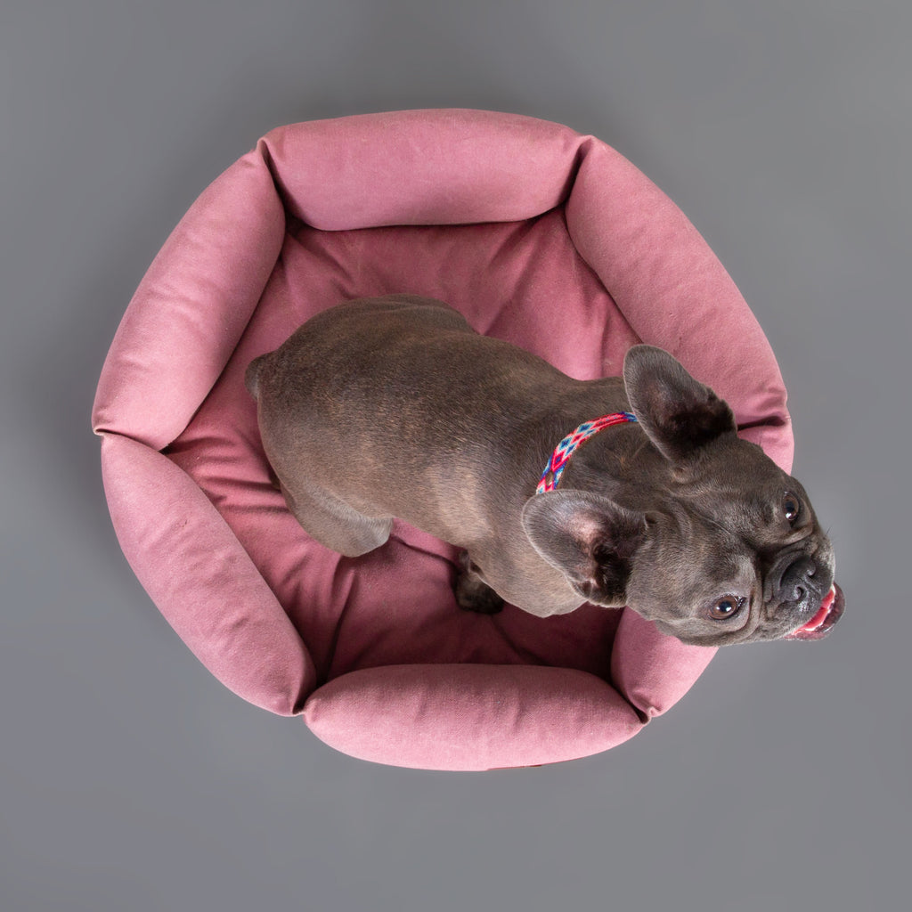 Size S   |  Momo, Frenchie, 20 lbs.