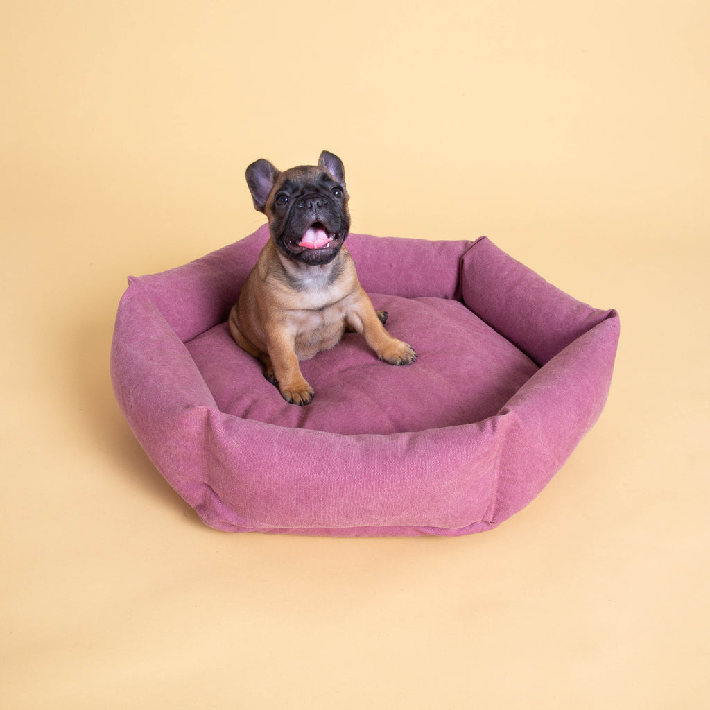 Size S   |  Ube, Frenchie puppy, 6 lbs.
