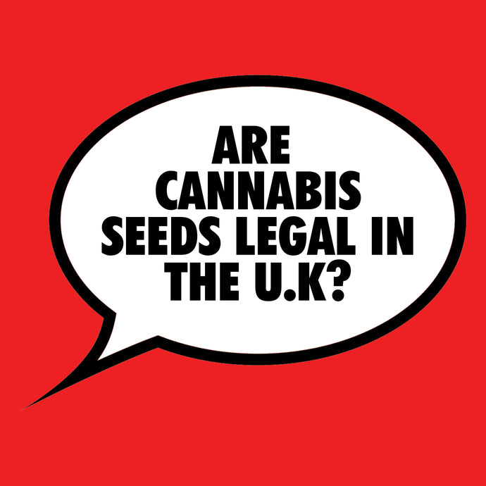 Are Cannabis Seeds Legal In The UK?
