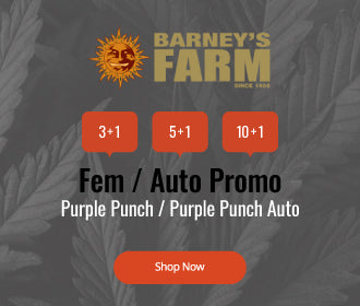 Barneys Farm Free Seeds Offer