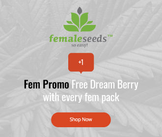 Female Seeds offer image, free dream berry with every feminised pack
