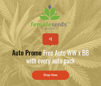 Female Seeds auto offer