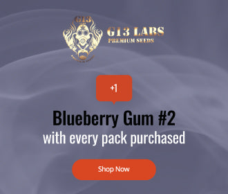 G13 Labs free Blueberry Gum number 2 with every pack purchased