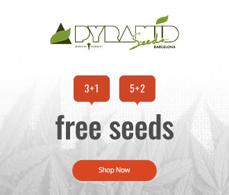 Pyramid Seeds free seeds offer