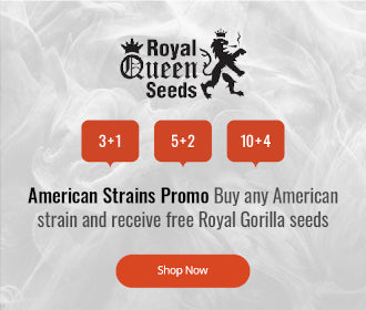 Royal Queen Seeds American Seed offer