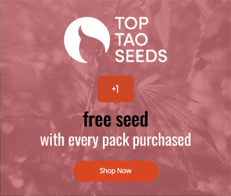 Top Tao Seeds