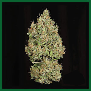 Royal Cookies Feminised Seeds
