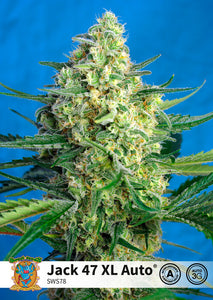 Jack 47 XL Auto Feminised Seeds