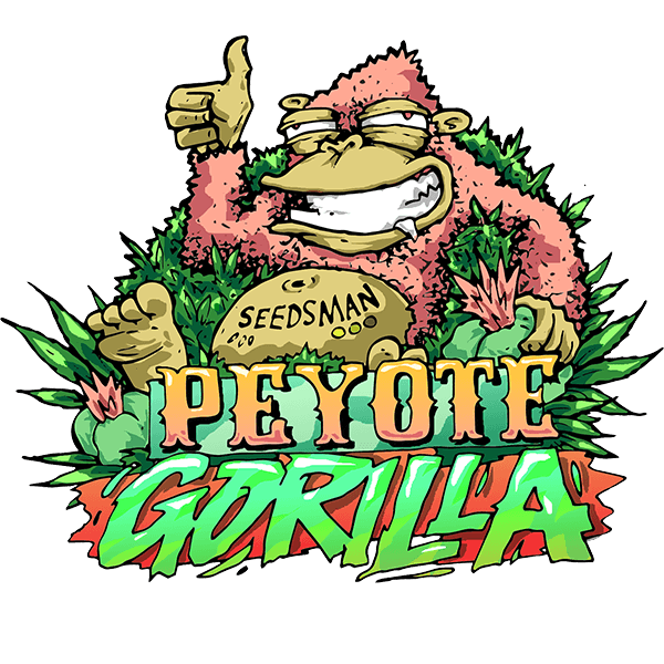Peyote Gorilla Feminised Seeds