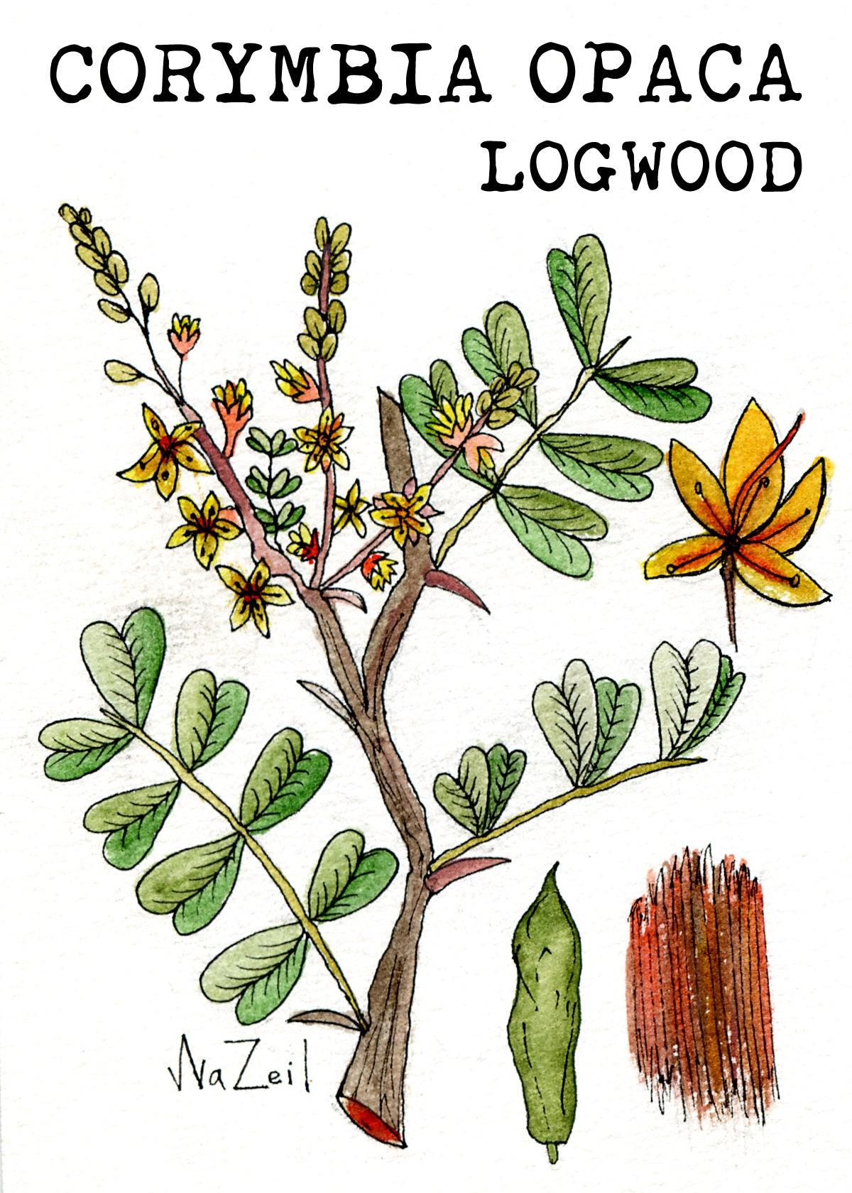 The Wild History of Logwood, An Ancient Natural Dye