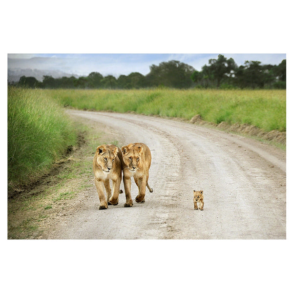 Lionesses and cub