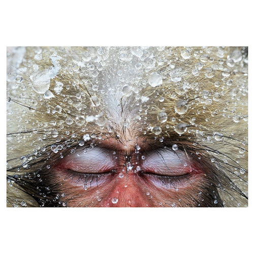 Japanese Macaque - Art & photography - StaaG®