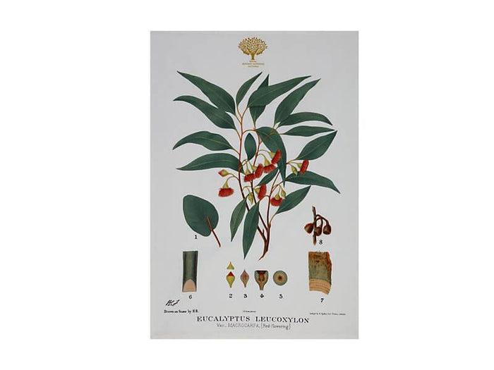 MAXWELL & WILLIAMS Royal Botanic Garden Tea Towel 50x70cm