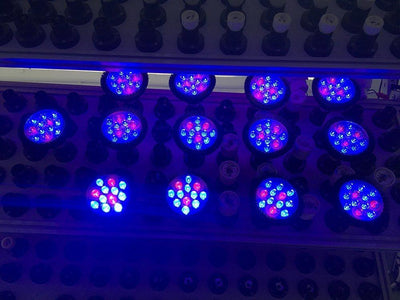 12W LED Grow Light Lamp E27 Base 2 Band Wavelenth Mix 12 LED Growing Bulbs For Stocky Plants At Seedlings Stage of Growth, Germinating Vegetable Seeds, Mini Potted Succulent/Faux Plant