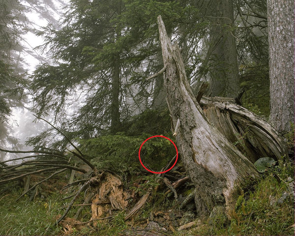 Can You Spot the Sniper in These Pictures?