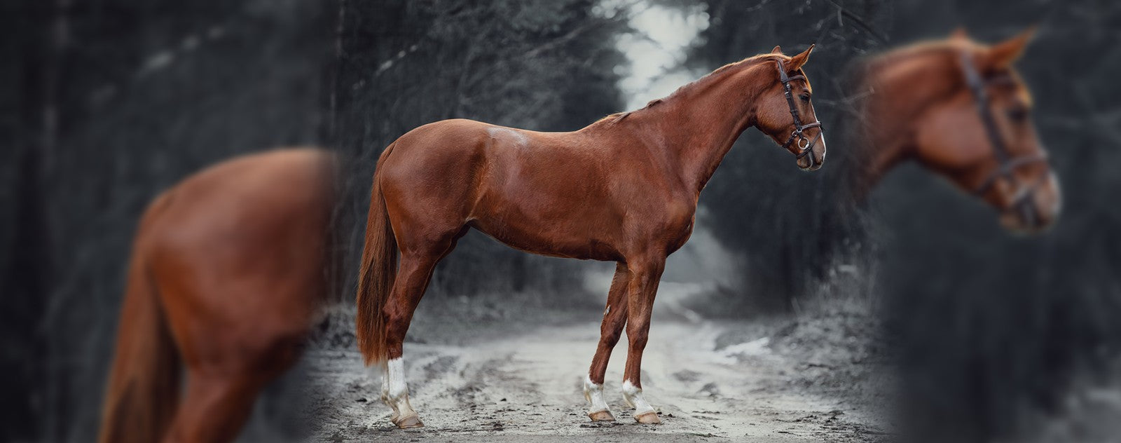 metiers-cheval