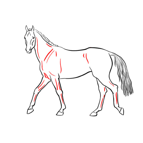 muscle-cheval