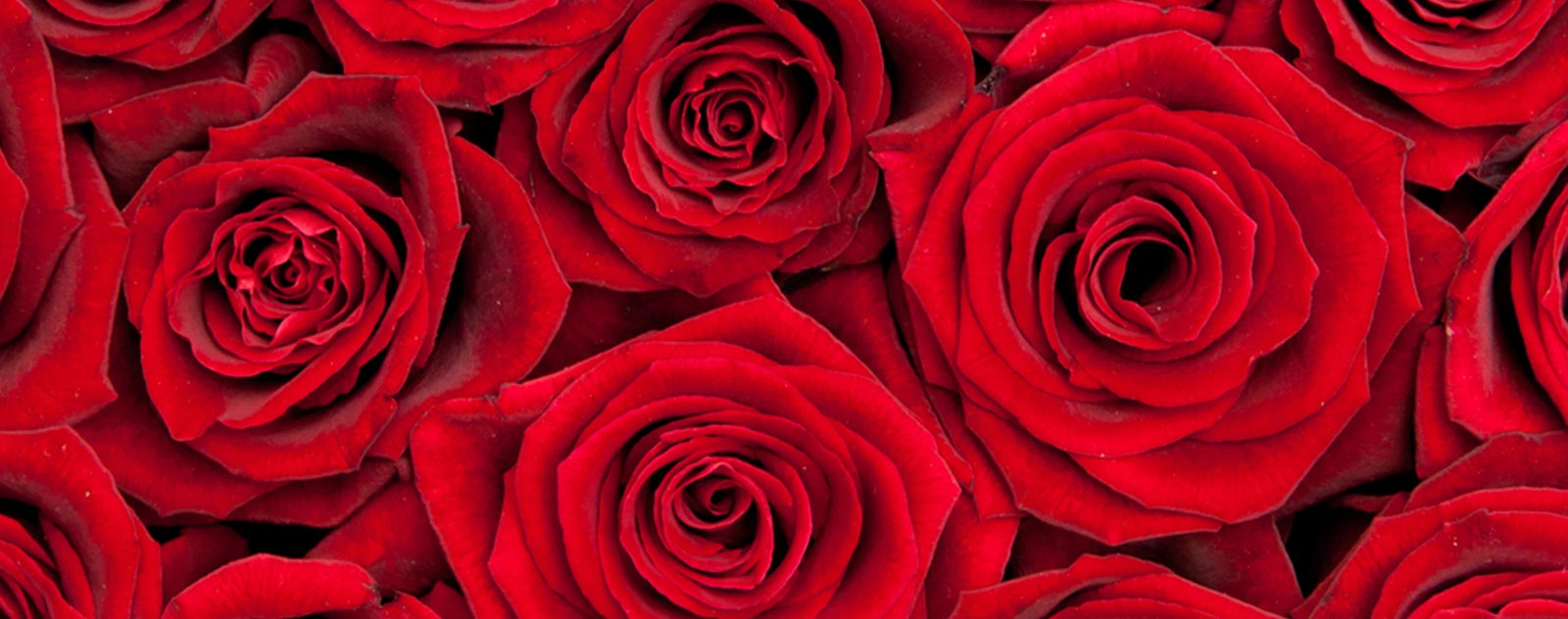 rose-expression-amour