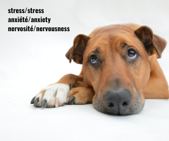 Signs and symptoms of your pet's anxiety