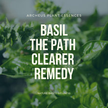 Plant Essence - Basil  (from melancholy to focus)