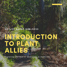 Introduction to Plant Allies - Saturday 12 October