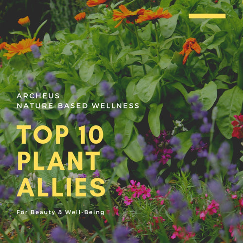 Top Ten Plant Allies for Beauty & Well-Being 3 April