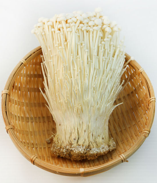 "Enoki Bowl | 6"" x 3"" 