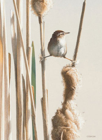 Museums and Galleries - Spring Marsh Wren