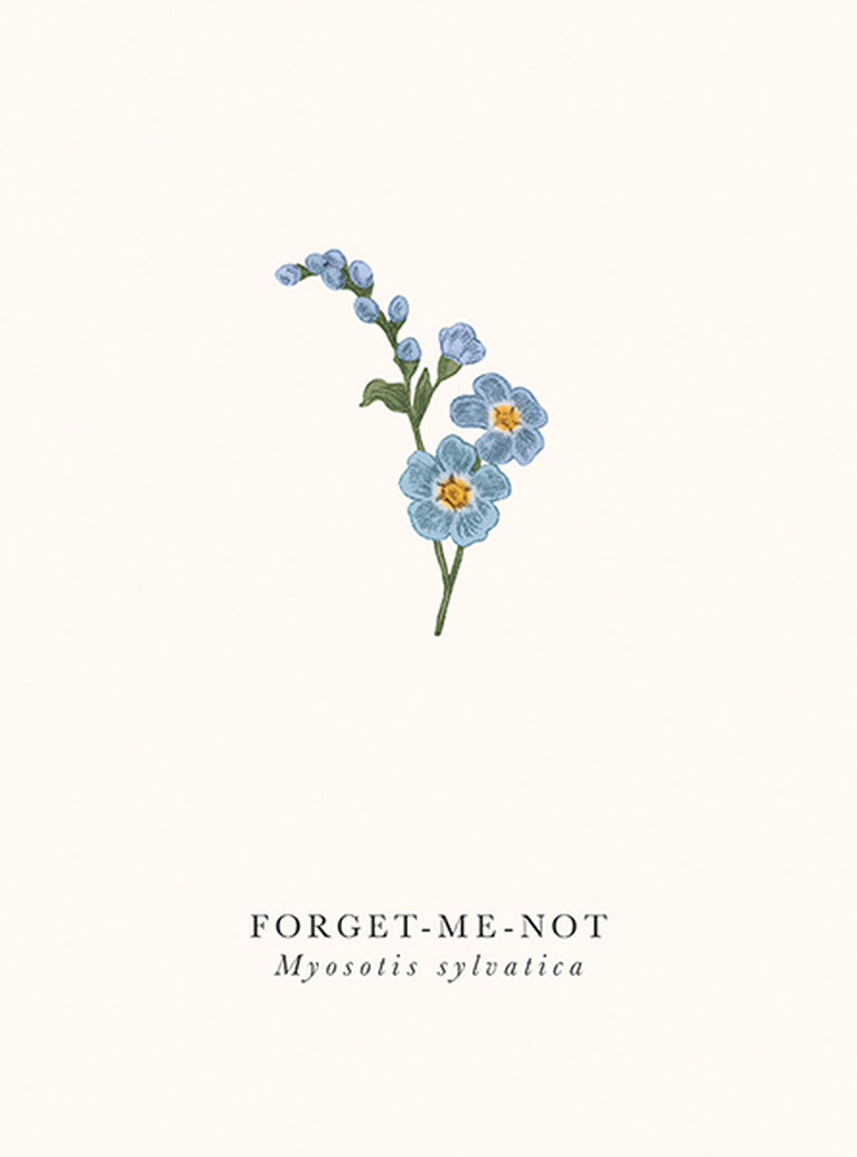 Art File - Forget Me Not