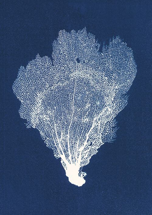 Jo de Pear - Sea Fan