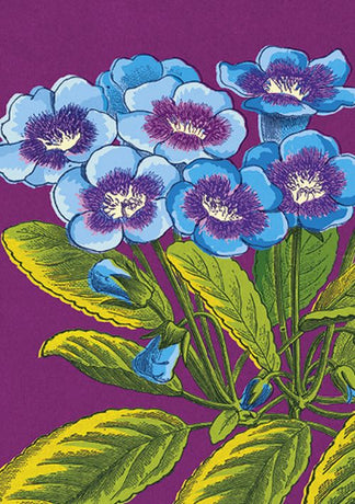 Julia Trigg - Purple Primroses