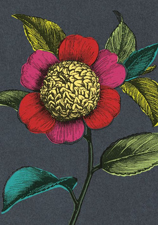 Julia Trigg - Colourful Camellia