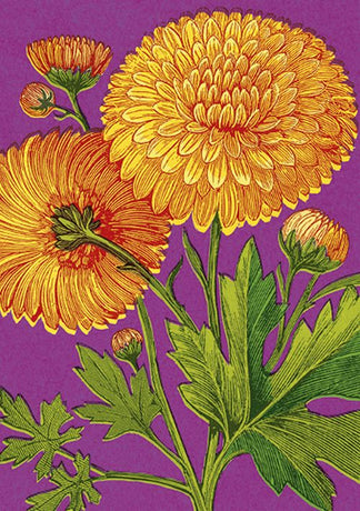 Julia Trigg - Yellow Chrysanths