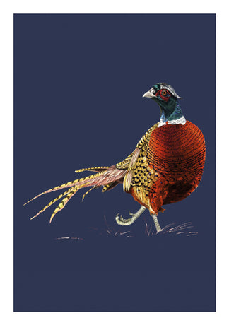 Ben Rothery - Pheasant