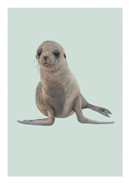 Ben Rothery - Seal