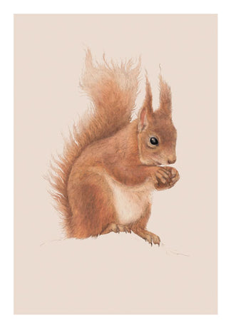 Ben Rothery - Red Squirrel