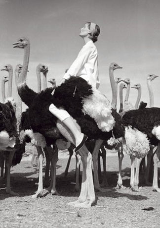 Norman Parkinson - Wenda & Ostriches, 1951