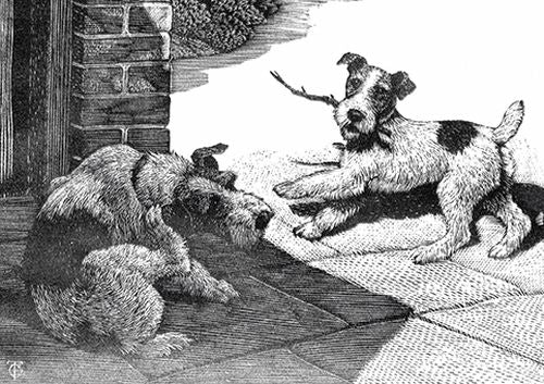 Charles Tunnicliffe - Fox Terriers Before and After Bob Martin's