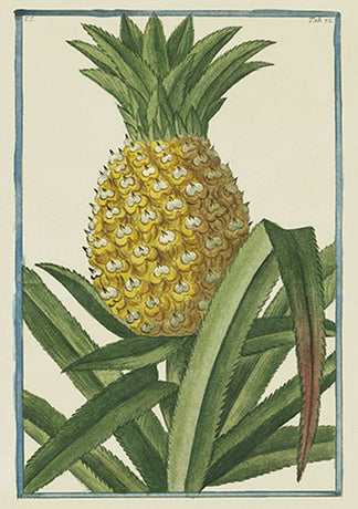 Cesare Ubertini - Pineapple