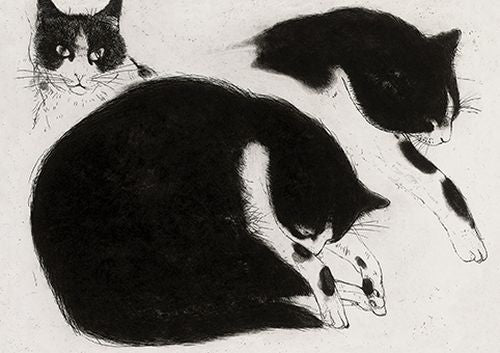 Elizabeth Blackadder - Black and white cat