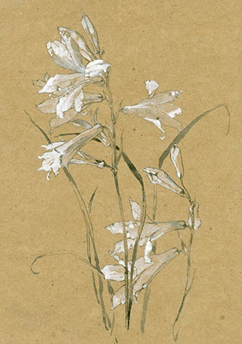 Royal Academy - Alfred Parsons - St Bruno's Lily