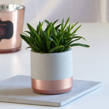 Load image into Gallery viewer, ProductImageAltText_pot dinard rosegold_1