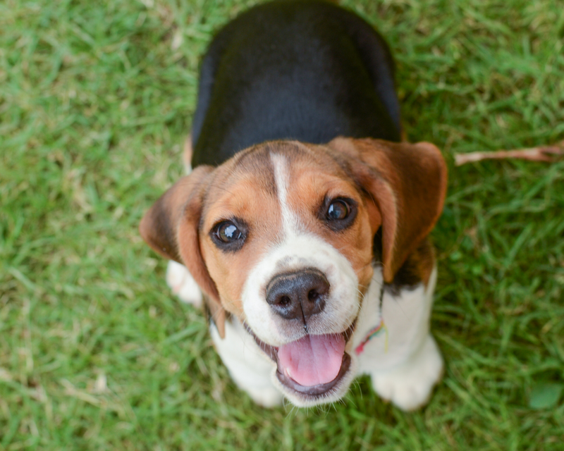 Puppies Tips: How to educate your puppy well in their first months