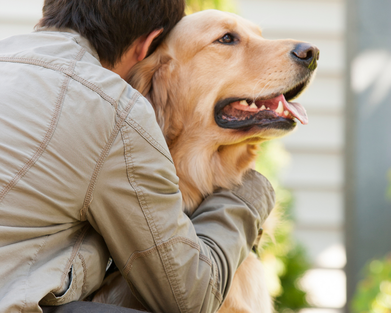 10 tips for taking care of your dog