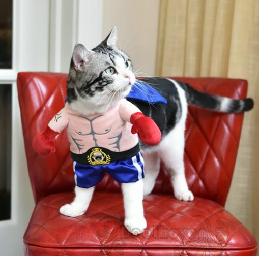 Boxer Cat Costume - World Pet Lovers